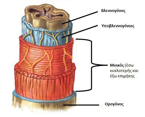 peptiko-sistima2